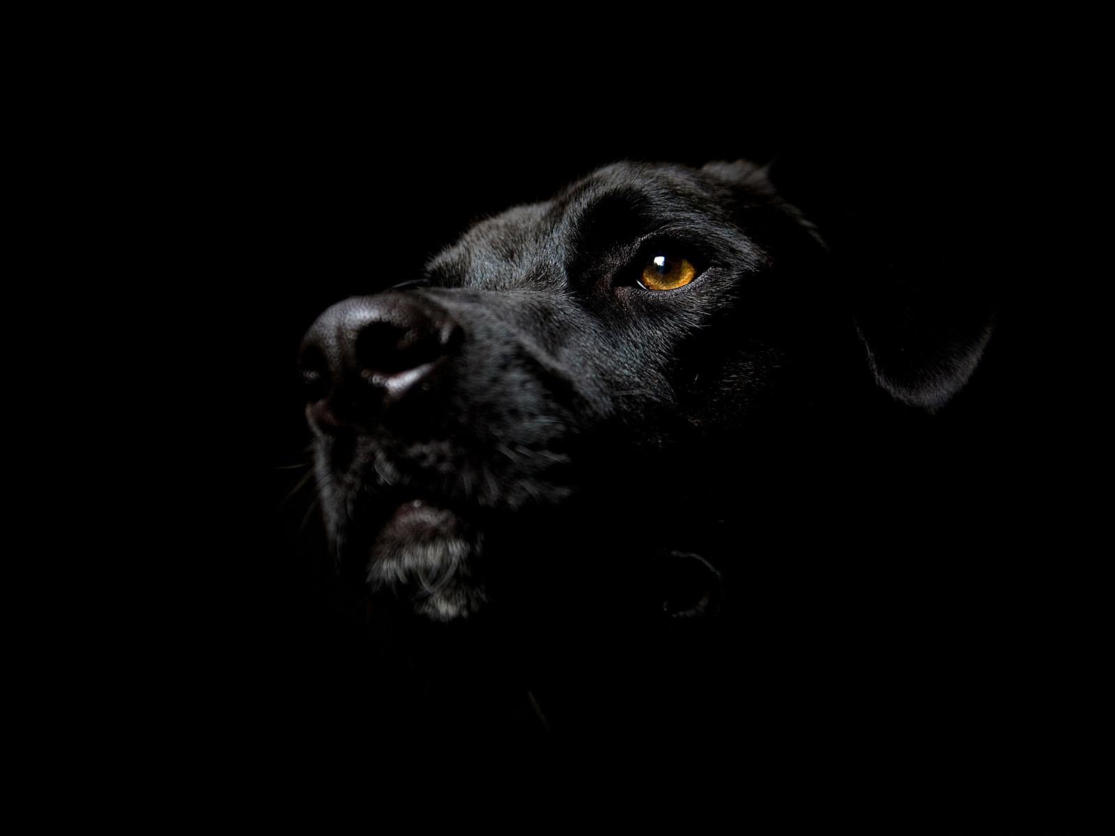фото черный цвет