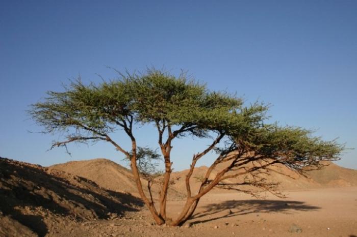 Spectacular Desert Plant Life  Amazing Nature  YouTube
