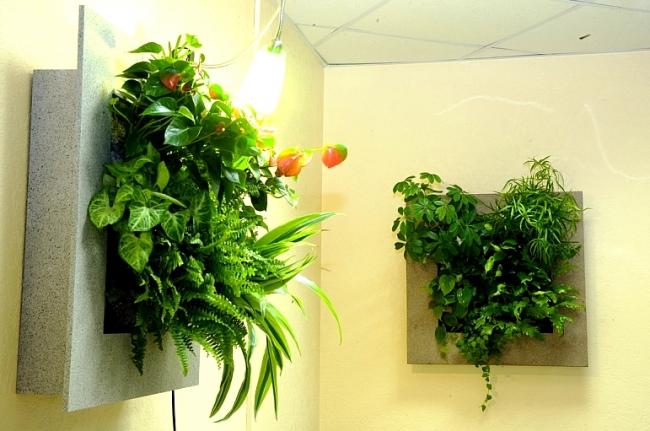 Зеленая стена из растений своими руками 827
